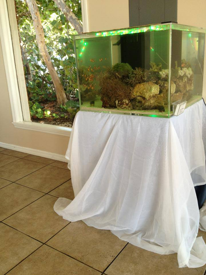 Reef Aquarium Wedding Cake Green