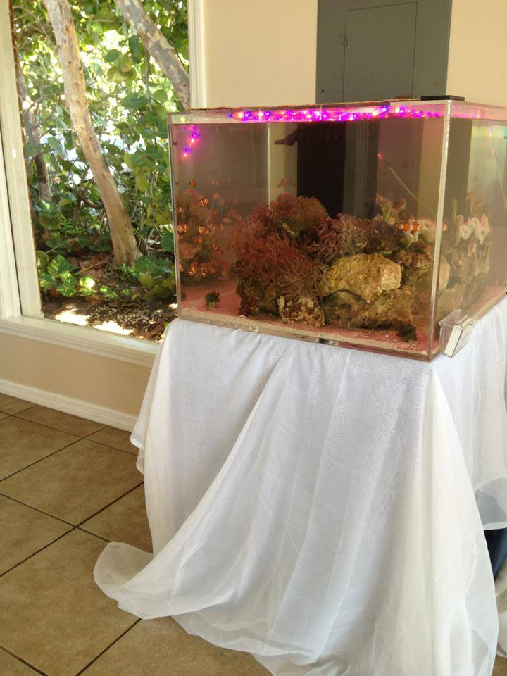 Reef Aquarium Wedding Cake Pink