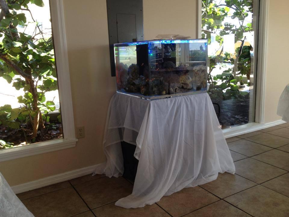 Reef Aquarium Wedding Cake Set Up