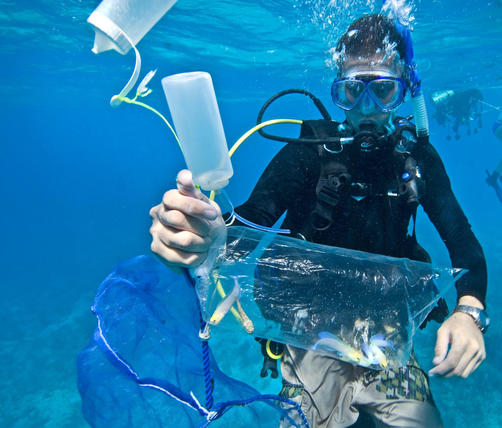 Adeljean Ho Diving