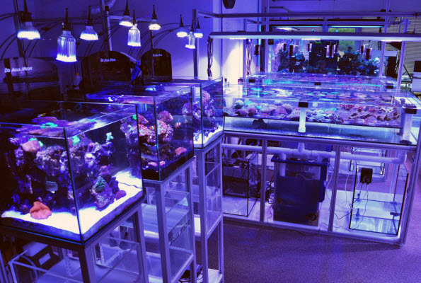 Aquarium store loveland co motorcycle kart cart karting for Live fish store