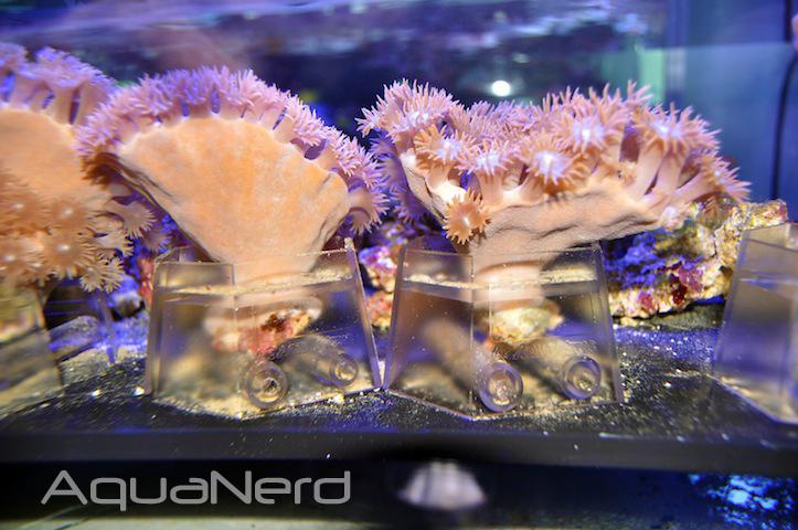 Aqua Medic Coral Holder