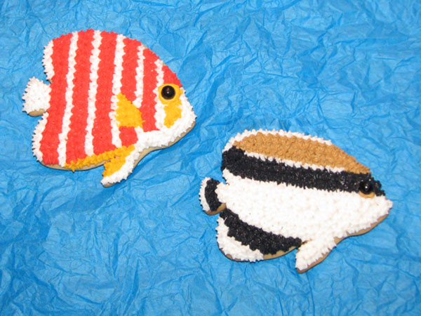 Jason Langer Peppermint and Bandit Angelfish