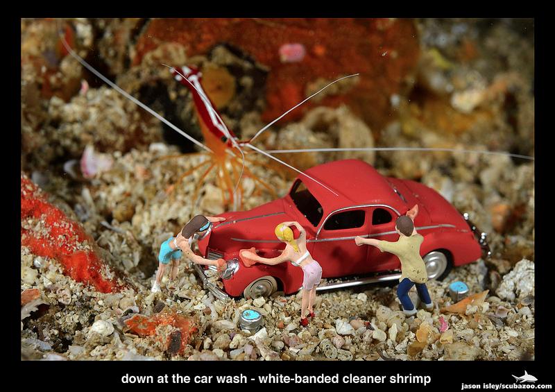 Leisure - Car Wash by Jason Isley