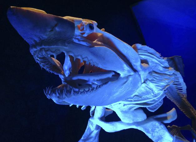 Georgia Aquarium Opens Sea Monsters Revealed Exhibit ...