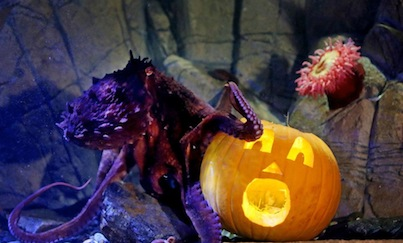 LegoLand Pumpkin with Octopus