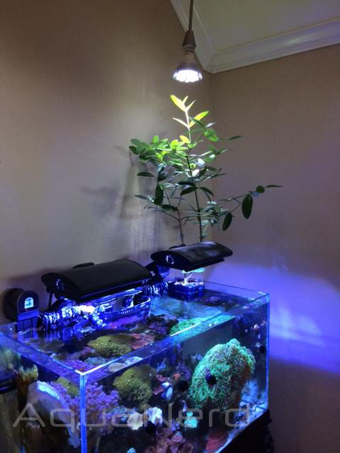 Red Mangrove Reef Tank