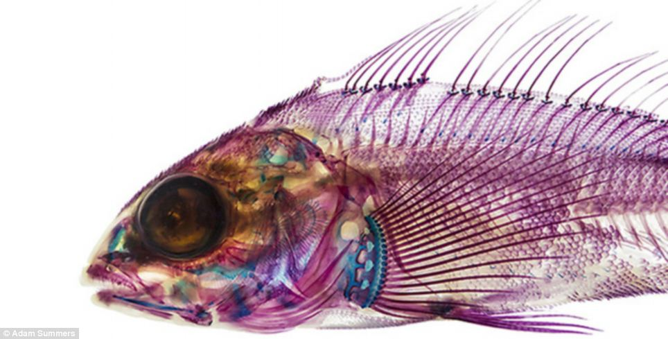 Interior Fish