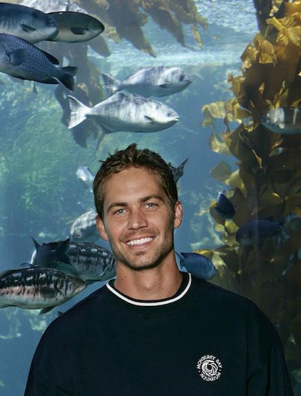 Paul Walker Monterey Bay Aquarium