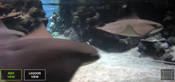 Shark Lagoon Cam