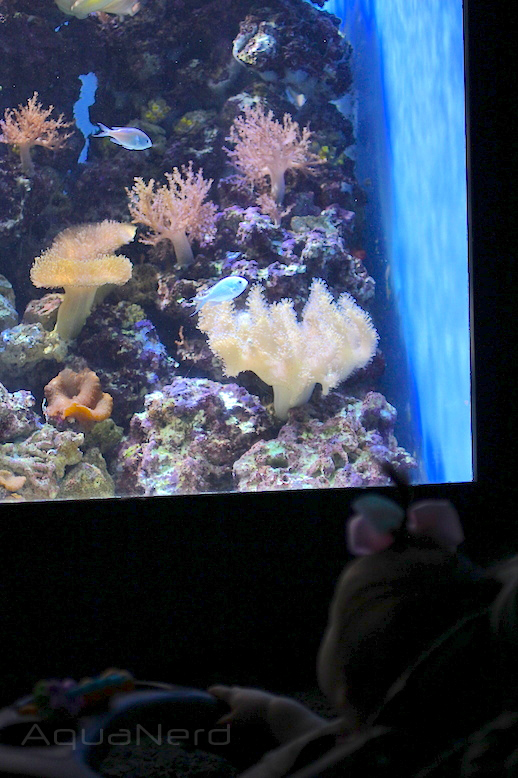 Capture Amazement with Aquariums