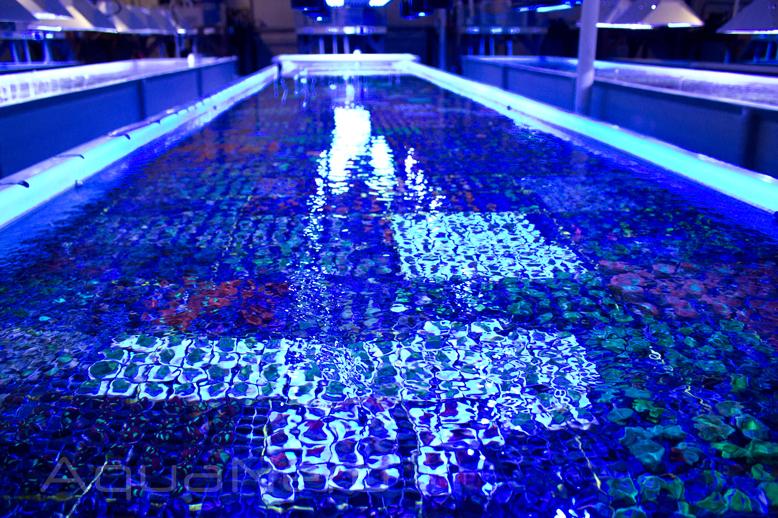 Raceway Aquarium Unique Corals