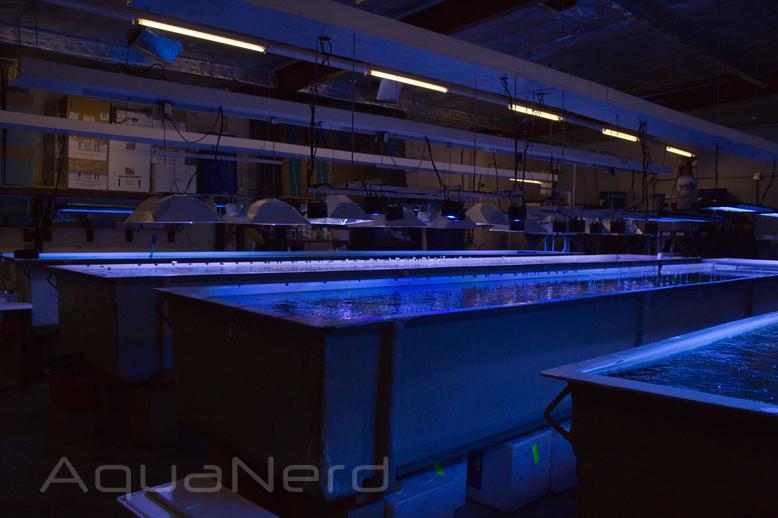 Unique Corals Frag Tank