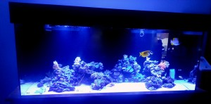 EcoTech Marine Display Tank