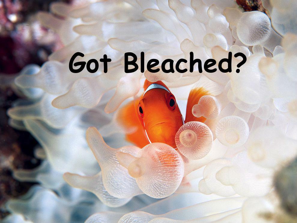 Got Bleached?