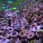 ReefKoi Coral Rack