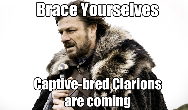 Brace Yourself Captive Bred Clarions