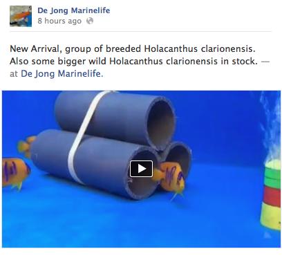 De Jong Marinelife Clarion