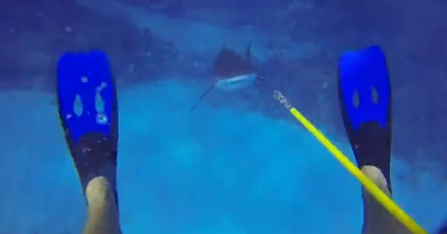 Shark Attacks Diver
