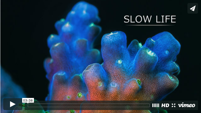 Slow Life Coral Video