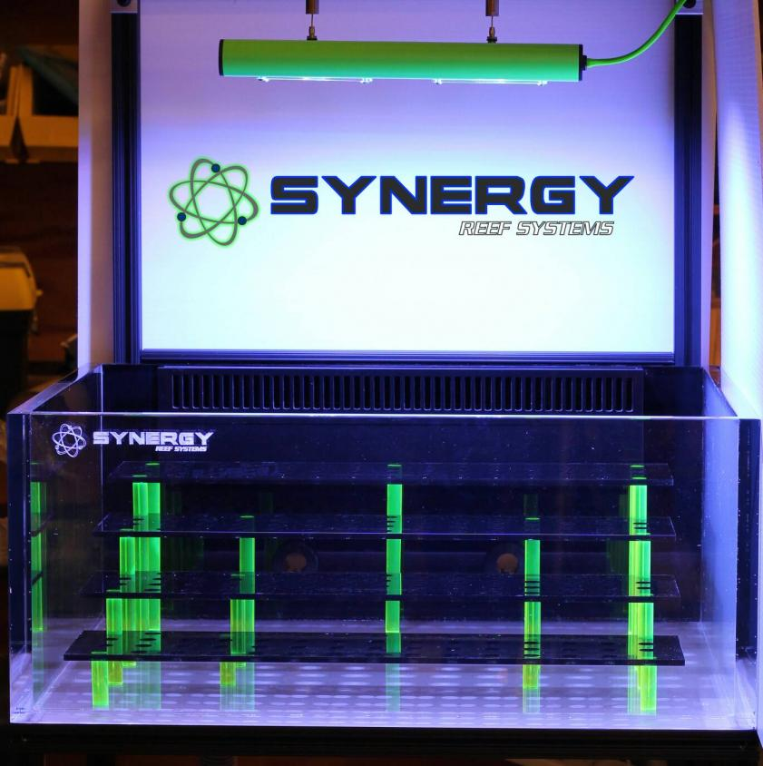Synergy Reef Systems Show Tank