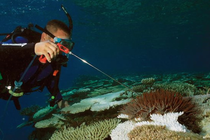 Crown of Thorns Starfish
