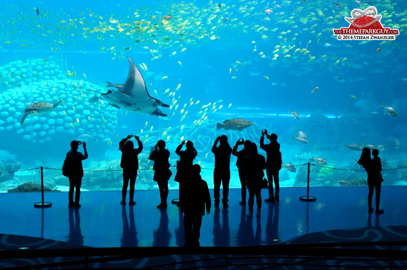 Manta Ray Chimelong Ocean Kingdom