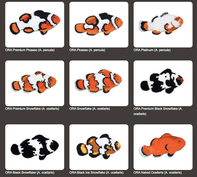 ORA Clownfish Cookies