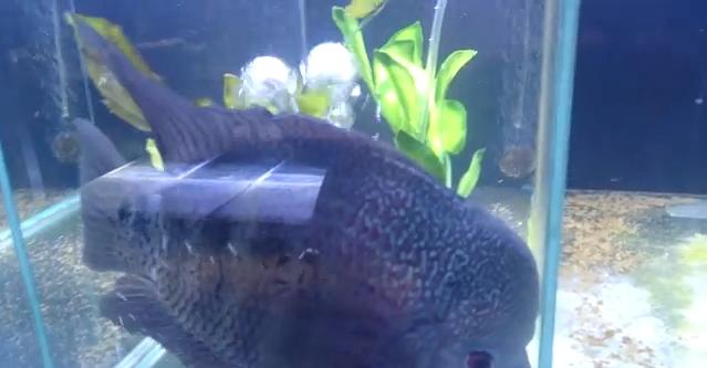 Fish Farts in Aquarium