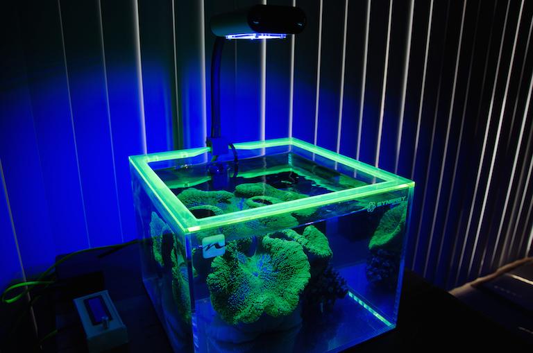 Green Carpet Anemone Synergy Nano