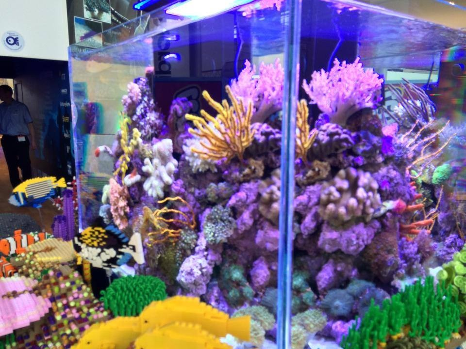 Tropical Marine Centre Reef Tank and Legos