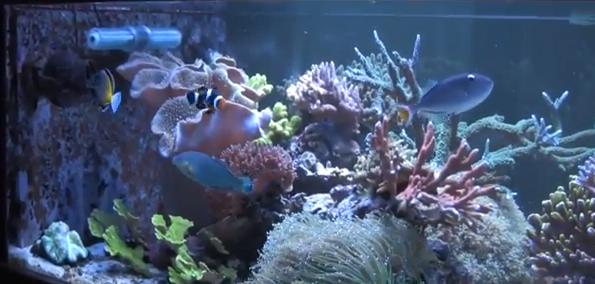 Riptide Gyre Generator Reef