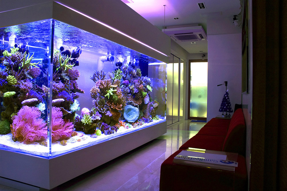 Chingchai Reef Aquarium