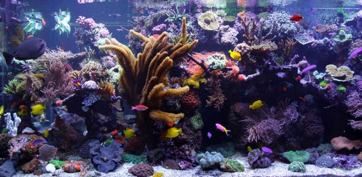 David Saxby Reef Tank