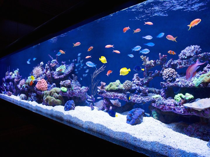 Esquire 10 Coolest Aquariums