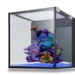Innovative Marine Fusion 10 Gallon Livestock