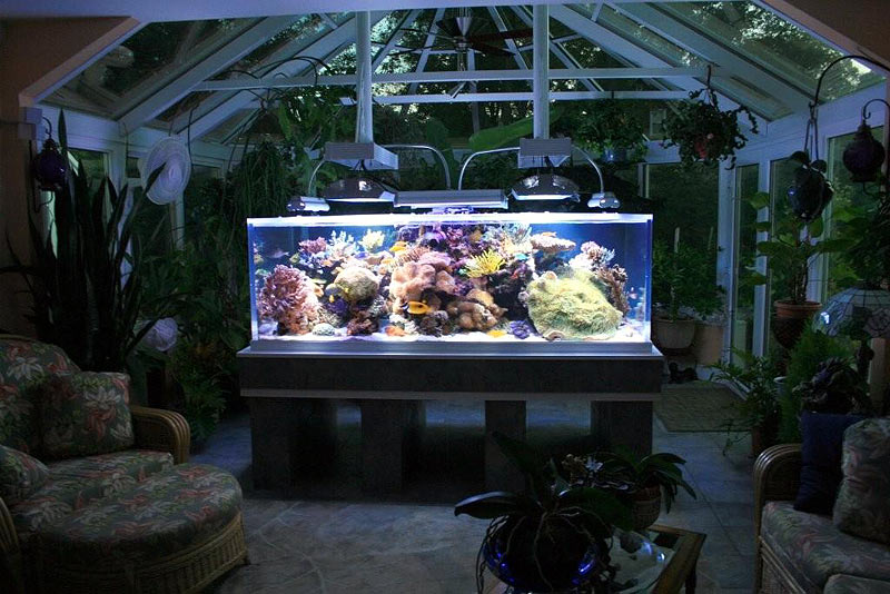 Paul Brun's Sunroom Reef Tank