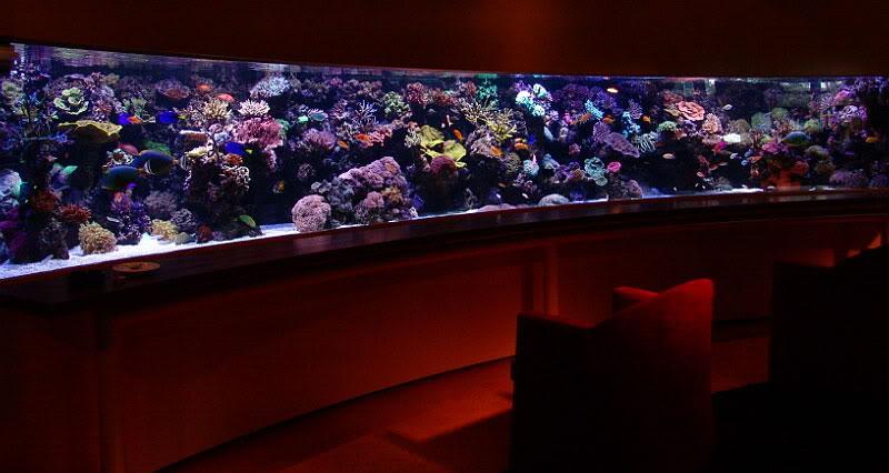 Pieter van Suijlekom's Curved Reef