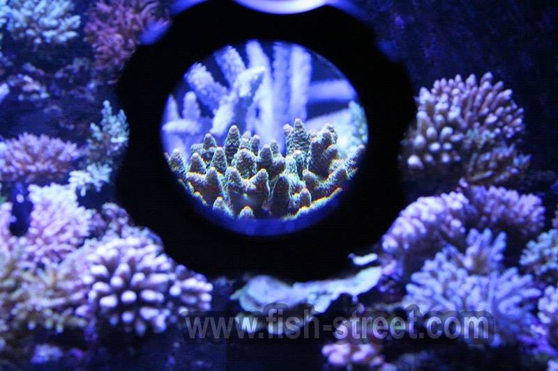 Fish-Street Magnified Coral Viewer
