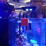 SKKYE Light 18 watt LED Clamp on Fusion at MACNA