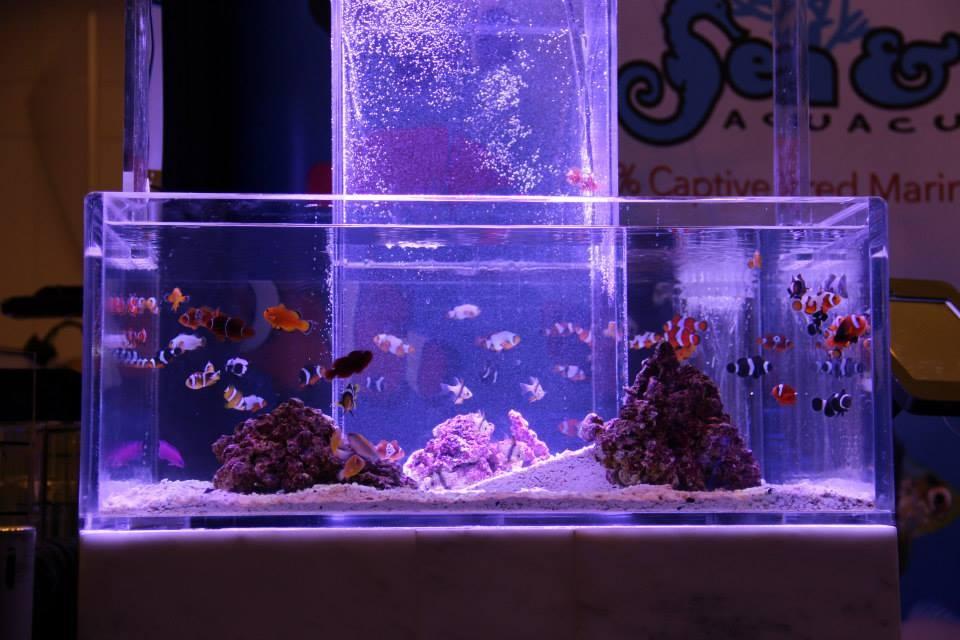 Sea & Reef Exhibit