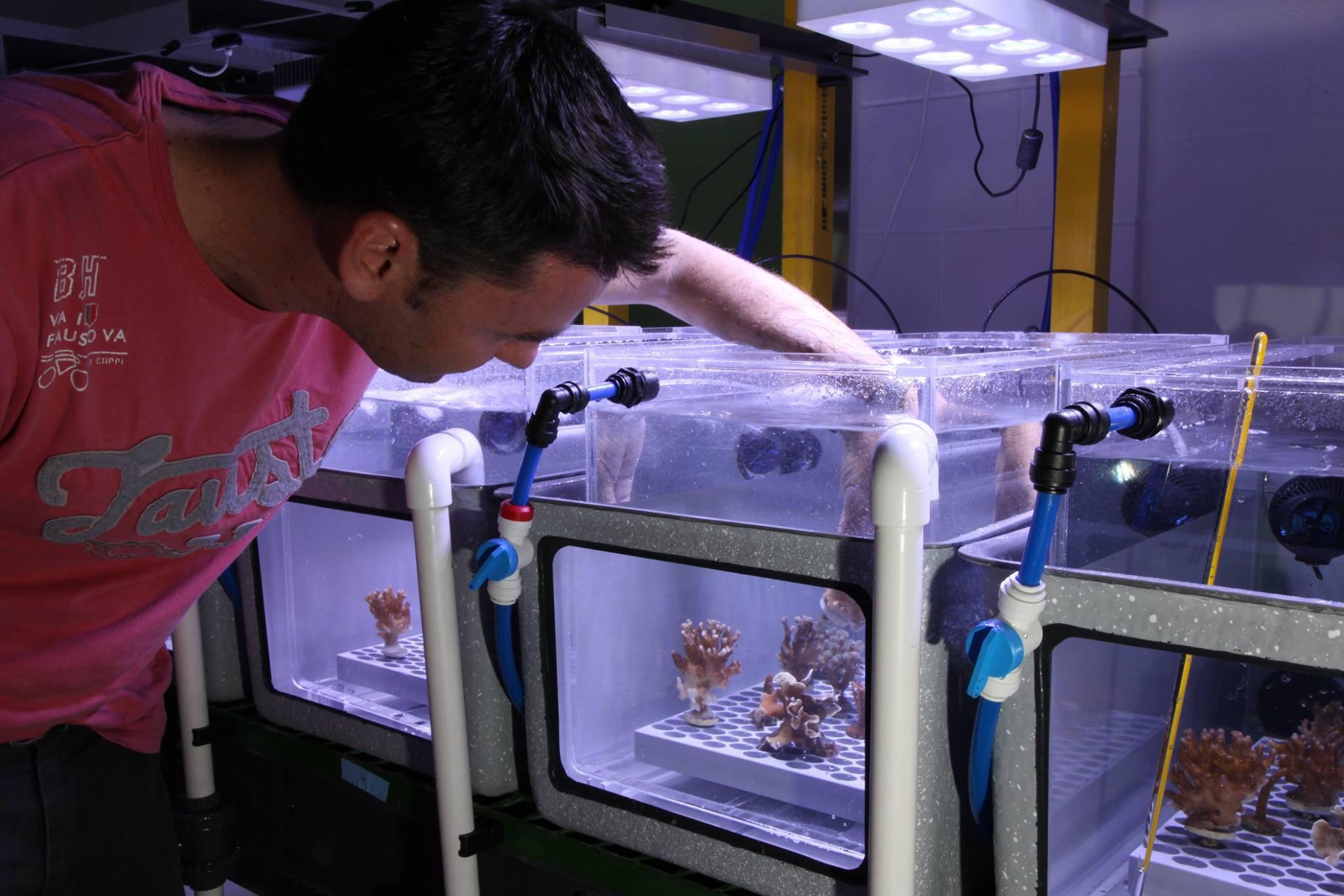 AIMS SeaSim Coral Research