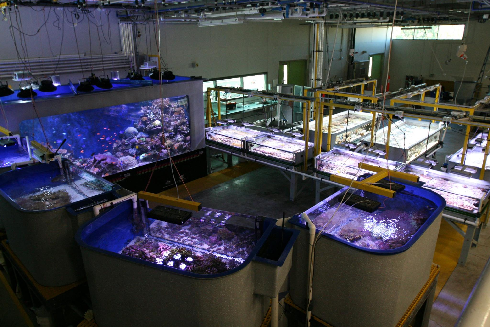 AIMS SeaSim Reef Tanks
