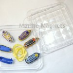 Marine Magnets Nudibranch Box