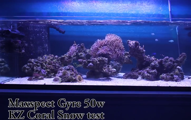 Maxspect Gyre vs VorTech MP40