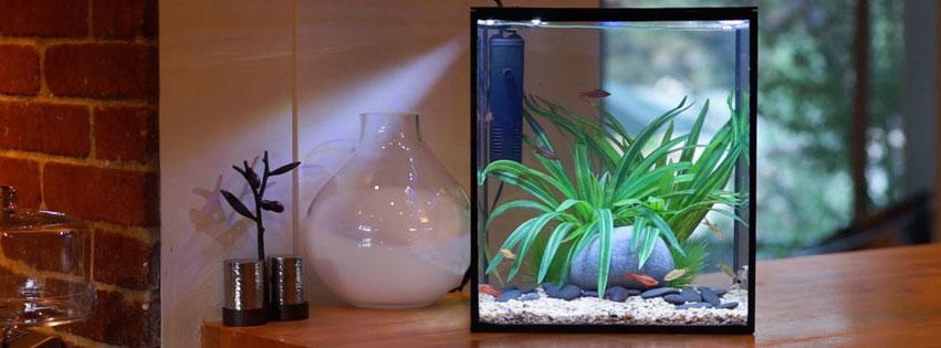 Current USA SOLO Aquarium