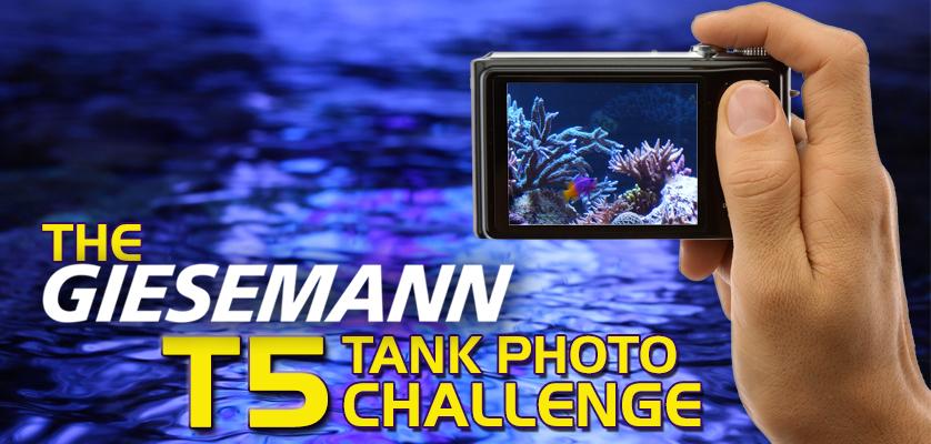 Giesemann T5 Challenge