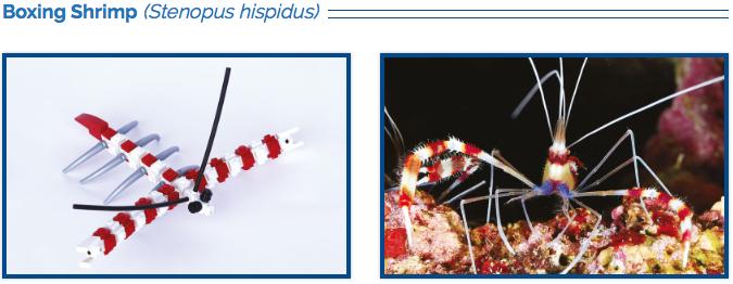 LEGO Coral Banded Shrimp
