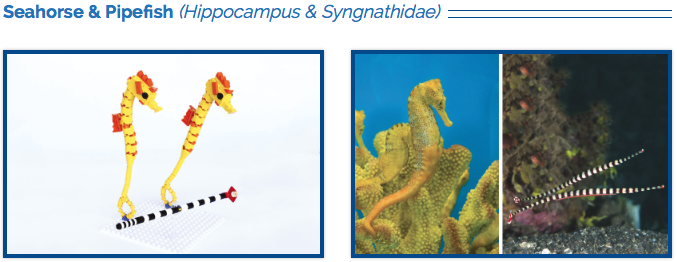 LEGO Seahorse and Pipefish