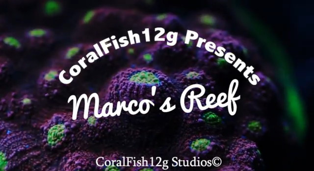 CoralFish12g Marco's Reef